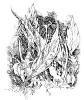 Trawy_04  (18x20 cm, rysunek tuszem)