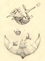 Lot_02  (20x26 cm, rysunek tuszem)